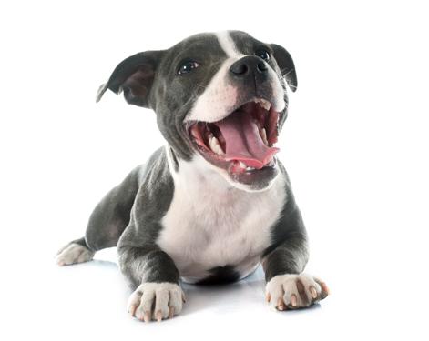 happy-pup.png